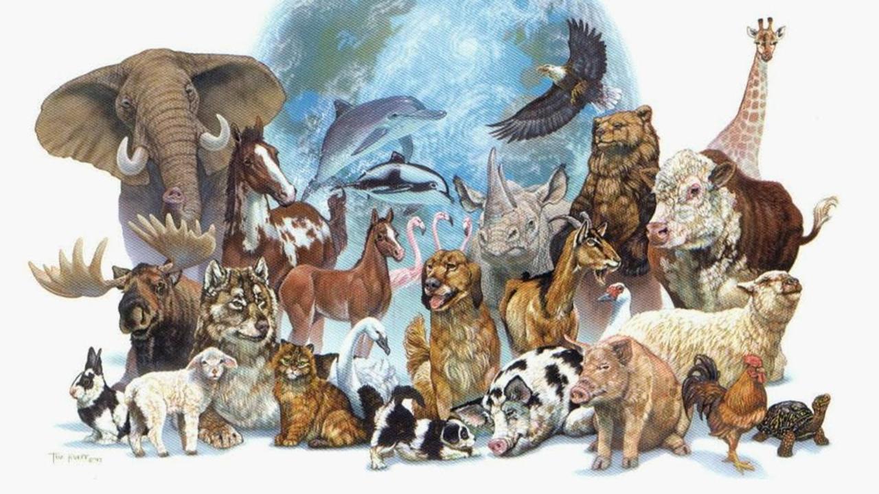 dag dieren-dag